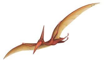 Real Pterodactyl Pictures
